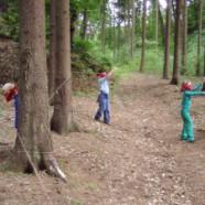Bodlinky v lese